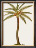 Coconut Palm Tree Framed Giclee Print by Georg Dionysius Ehret