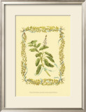 Sage Prints by Wendy Russell