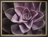 Echeveria I Posters by Andrew Levine