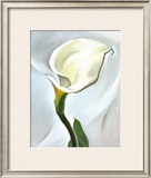 Calla Lily Turned Away, 1923 Prints by Georgia O'Keeffe