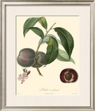 Plums Prints by Bessa