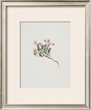 Small Alpine Rose Prints by Moritz Michael Daffinger