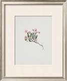 Small Alpine Rose Prints by Moritz Michael Daffinger