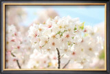 Japanese Cherry Blossom, Sakura II Framed Giclee Print by Ryuji Adachi