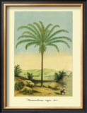 Maximiliana Palm Framed Giclee Print by Ch. Lemaire
