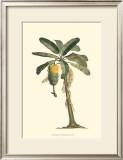 Exotic Palms VI Prints