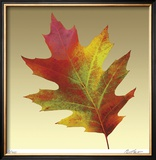 Oak Leaf Limited Edition Framed Print by Robert Mertens