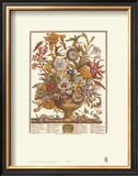 Twelve Months of Flowers, 1730, September Art by Robert Furber