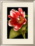Red Tulip I Art by Renee Stramel