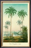 Coco Palm Prints by Ch. Lemaire