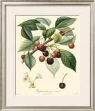 Cherries Art by  Bessa