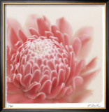 Pastel Study 4 Limited Edition Framed Print by Claude Peschel Dutombe