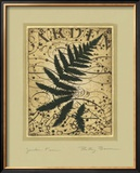 Garden Fern Posters by Betsy Bauer