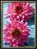 Dahlias Prints by Laurence Mouton