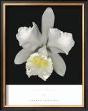 Cattleya Posters by Harold Feinstein