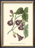 Blossoming Vine V Prints by Sydenham Teast Edwards