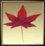 Japanese Maple Limited Edition Framed Print by Robert Mertens