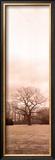 Chestnut Tree Prints by Alan Blaustein