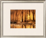 Golden Sunsets Prints by Jean-yves Guindon