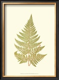 Lowes Fern I Prints by Edward Lowe