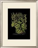 Weinmann Botanical on Black V Prints by Johann Wilhelm Weinmann