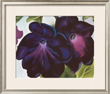 Black and Purple Petunia, 1925 Prints by Georgia O'Keeffe