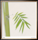 Bamboo Study 12 Limited Edition Framed Print by Claude Peschel Dutombe