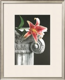 Stargazer Limited Edition Framed Print by Harvey Edwards