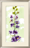 Delphinium Posters by Martha Collins