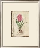 Pink Hyacinth Art by Lisa Canney Chesaux