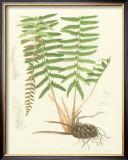 Eaton Ferns IV Poster by Daniel C. Eaton