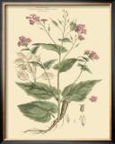 Blushing Pink Florals VII Art by  John Miller (Johann Sebastien Mueller)