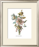 Anemones Sunples Volubulis Print by Jean Louis Prevost