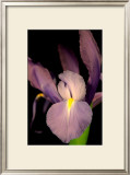Sweet Iris II Prints by Renee Stramel