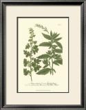 Leaves III Prints by Johann Wilhelm Weinmann