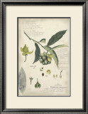 Descube Botanical II Posters by A. Descube