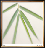 Bamboo Study 8 Limited Edition Framed Print by Claude Peschel Dutombe