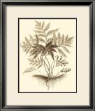 Sepia Munting Foliage IV Posters by Abraham Munting