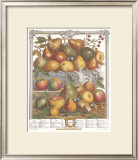 Twelve Months of Fruits, 1732, January Prints by Robert Furber