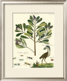 Naturalist Study II Prints by A. Bell
