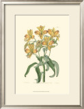 Golden Beauty III Prints by Sydenham Teast Edwards