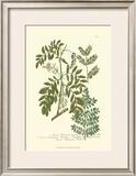 Leaves I Prints by Johann Wilhelm Weinmann