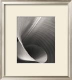 Curled Frond Posters by Deb Garlick