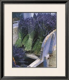 Lavender Harvest Prints by Gunter Rossenbach