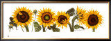 Sunflowers Posters by Patricia Shilling-Stewart
