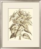 Sepia Munting Foliage III Prints by Abraham Munting