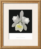 Cattleya Prints by Harold Feinstein