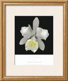 Cattleya Prints by Harold Feinstein