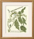 Weinmann Greenery II Print by Johann Wilhelm Weinmann