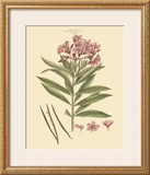 Blushing Pink Florals III Prints by  John Miller (Johann Sebastien Mueller)